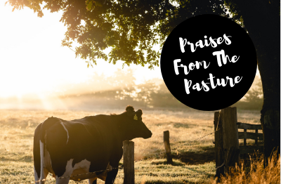 praises from the pasture